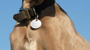dog wear dog tag